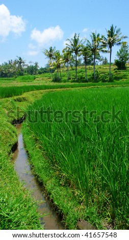 water canal irrigation system on rice paddy field