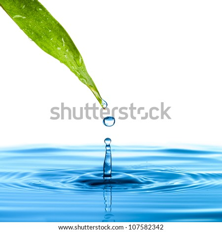 Water drop from green leaf on white background