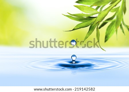 Water Drop from Leaf - stock photo