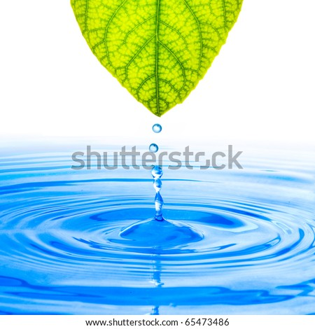 Water drop from tree leaf - stock photo