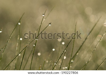 water drop in green grass