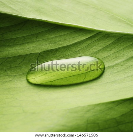 water drop on a leaf - stock photo