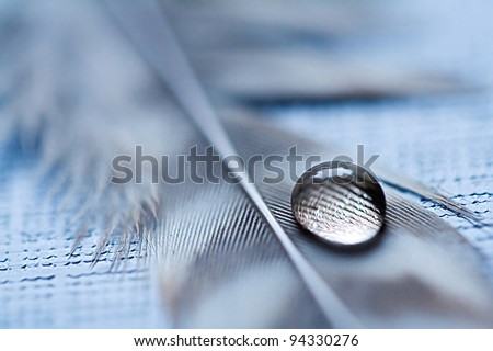 Water drop on feather - stock photo