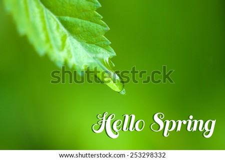 Water drop on fresh green leaf on green background. Hello Spring concept - stock photo