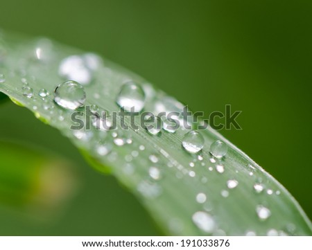 Water drop on green grass, macro, green background.