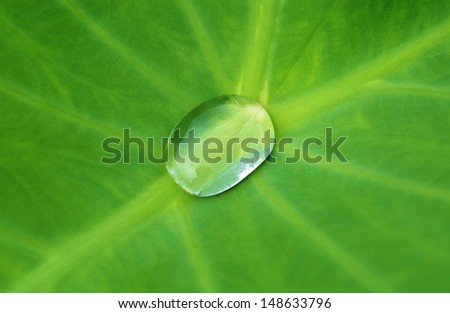 Water drop on green  leaf - stock photo