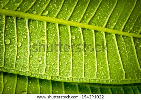Water drop on green leave with texture detail. - stock photo