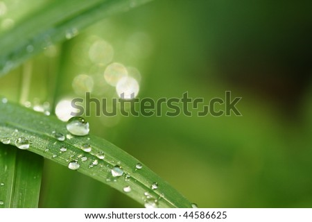 water drop on leaf - stock photo