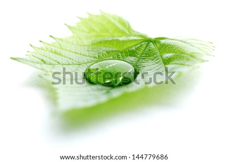 Water drop on leaf isolated on white background macro - stock photo