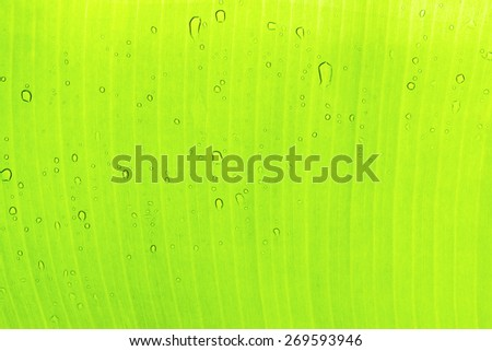 Water drop on Palm leaf - stock photo