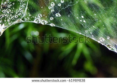 Water drop on spider web - stock photo