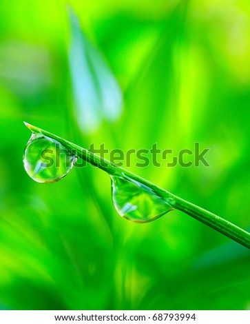Water drop on the fresh green grass. Close up with shallow DOF.