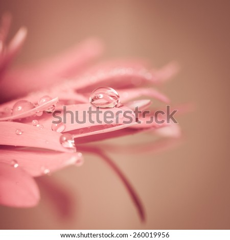 Water drop on the pink flower, very close up - stock photo