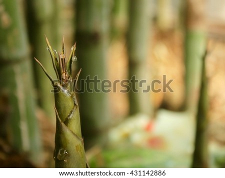 Water drop on the top of bamboo shoot - stock photo