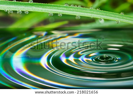 Water droplets from green leaves of Grass natural background. - stock photo