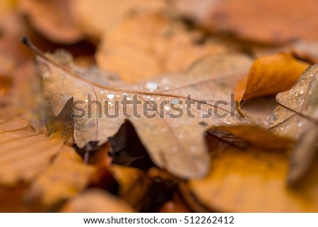 Water droplets lying on autumnal fallen leaf. Rainy day and dead leaf with water droplets.