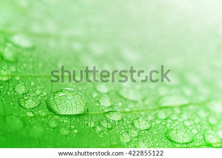 Water droplets on a leaf, beautiful natural background - stock photo