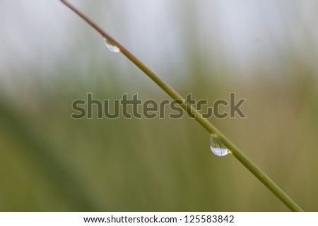 Water droplets on blade of grass reflecting landscape, horizontal - stock photo