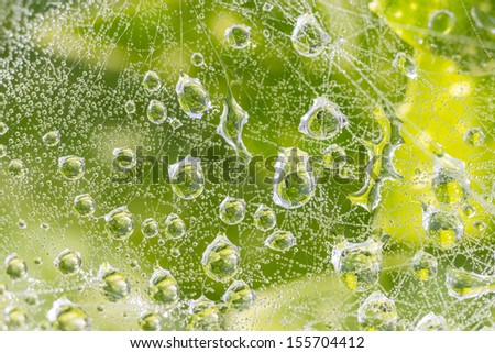 Water droplets on spider webs and leaves - stock photo