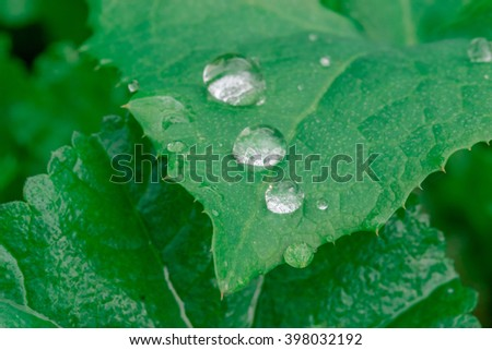 Water droplets on the leaf - stock photo