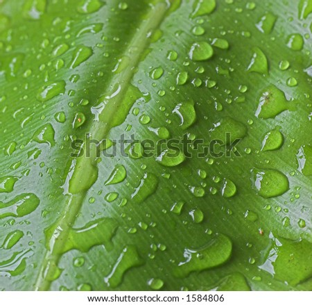 water drops effects against leaf background