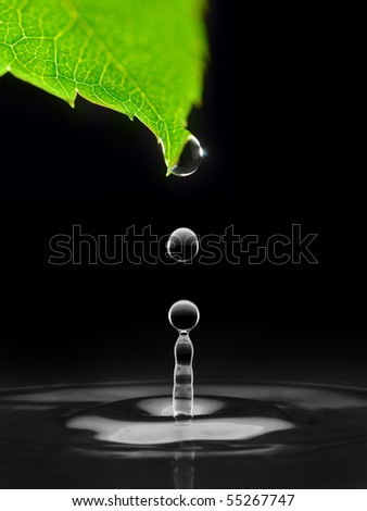 water drops falling down from green leaf, isolated on black - stock photo