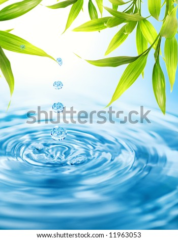 Water drops falling from a bamboo leaf - stock photo