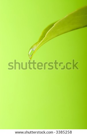 water drops from leaf, shallow depth of field and isolated over a green gradient background