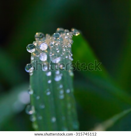 Water drops of dew on green grass with soft focus - stock photo