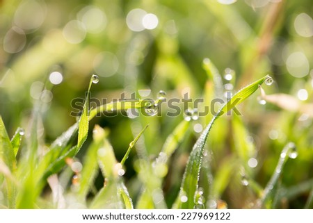 water drops on a green grass - stock photo