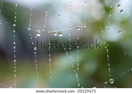 Water drops on a spiders web after early morning rain