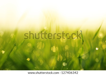 Water drops on blade of grass (Shallow Dof) - stock photo