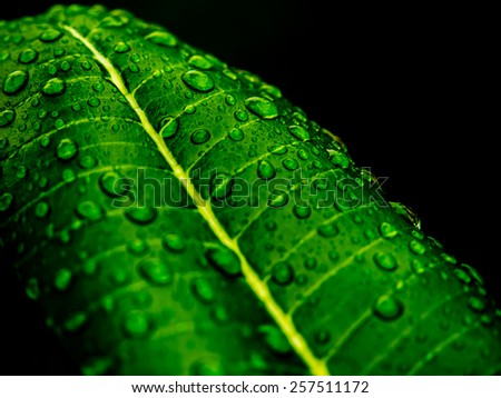 Water drops on fresh green leaf - stock photo