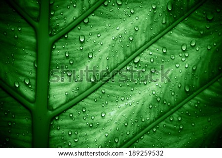 Water drops on fresh green leaf, Macro texture - stock photo