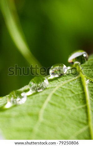 water drops on fresh green leaf on blurred background
