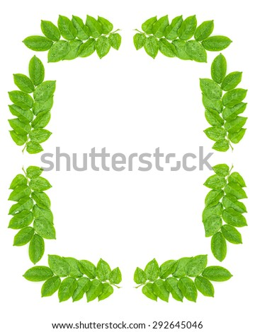 Water drops on fresh green leaves on white background - stock photo
