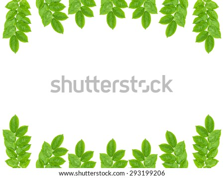 Water drops on fresh green leaves on white background for picture frame - stock photo