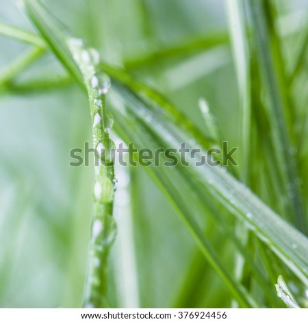 Water drops on grass. Shallow deep of field.