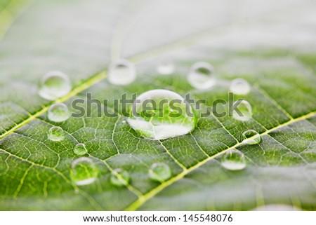Water drops on green fresh leaf macro - stock photo