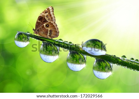 Water drops on green grass and butterfly Morpho - stock photo