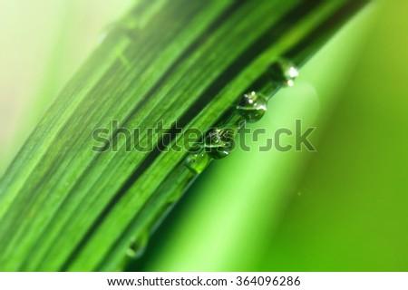 Water drops on green grass, macro, shallow DOF - stock photo