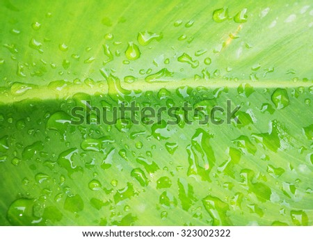Water drops on green leaves close up This image, adjust the lighting, there is a dark tone to highlight colors of the leaves and the water droplets. - stock photo