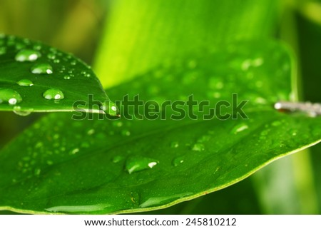 water drops on green plant leaf - stock photo
