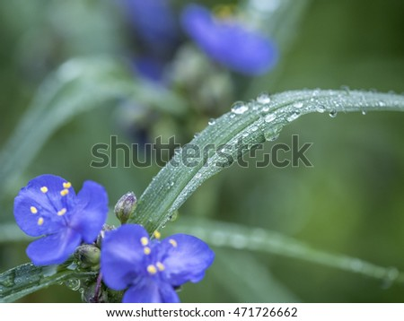 Water drops on leaf next to blue flowers in summer