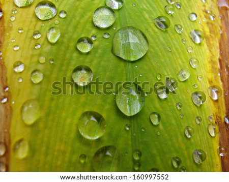 water drops on leave                 - stock photo