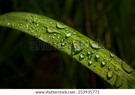 water drops on the blade of grass - stock photo