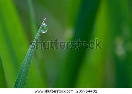 Water drops on the grass. Close up. - stock photo