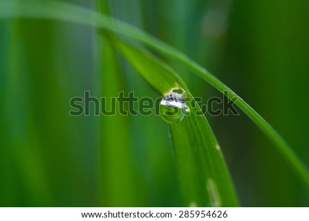 Water drops on the grass. Close up.