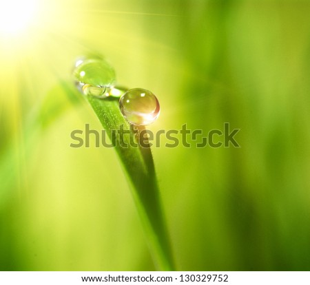 Water drops on the green nature background - stock photo