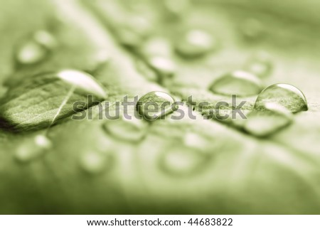 water drops on the leaf - stock photo